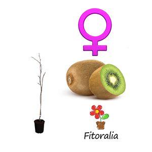 Kiwi Hembra - Actinidia deliciosa