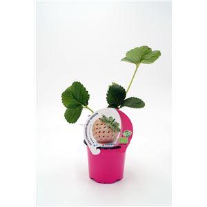 Fresa Ananas M-10,5 ECO