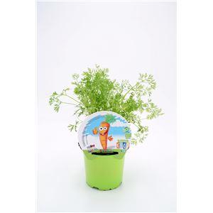 Zanahoria Colección KIDS M-10,5 ECO