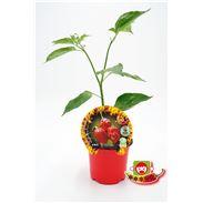 Picante Habanero Rojo M-10,5 Capsicum chinense - 02028012 (1)