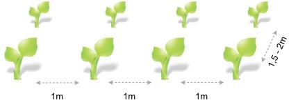 Marco plantacion calabaza