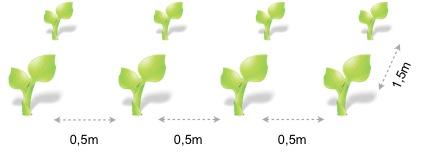 Marco plantacion pepino