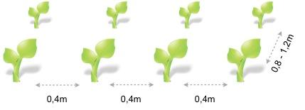 Marco plantacion pimiento